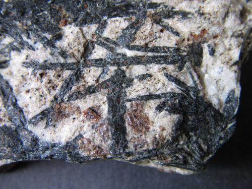 Micaesquisto con granate y anfíbol<br />Zemmgrund, Zillertal, Tirol Norte, Tirol, Austria<br />4 cm. ancho de campo<br /> (Autor: prcantos)