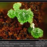 Adamite (variety cuprian adamite)<br />Potosí Mine, Santo Domingo (Francisco Portillo), Santa Eulalia District, Municipio Aquiles Serdán, Chihuahua, Mexico<br />fov 2.6 mm<br /> (Author: ploum)