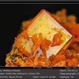 WulfeniteMina Rowley, Theba, Distrito Painted Rock, Montes Painted Rock, Condado Maricopa, Arizona, USAfov 8 mm (Author: ploum)