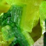 Torbernite+Saléeite<br /><br />FOV 1 cm<br /> (Author: Cesar M. Salvan)