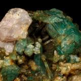 Beryl (variety emerald), Albite (variety cleavelandite), Calcite, Apatite<br />Colombia<br />37x18x33mm<br /> (Author: Fiebre Verde)