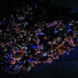 Xenotima-(Y), Aegirina, Microclina y GoethitaMonte Malosa, Distrito Zomba, Malawi5.9 cm x 3.5 cm x 1.7 cm (Autor: L Alejandro FG)