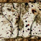 Espinela en Olivino<br />Volcán de Cancarix, Cancarix, Hellín, Comarca Campos de Hellín, Albacete, Castilla-La Mancha, España<br />Campo de visión 350 micrones<br /> (Autor: Vinoterapia)