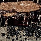 """La zona superior de la foto muestra un material oscuro, a veces rojizo, que podría interpretarse como Azabache. Claramente se observa un fragmento vegetal fósil y unas fracturas rellenas de calcita. La parte inferior corresponde a una calcarenita, donde pueden observarse algunos fragmentos de conchas. Igualmente, se observa un material negro aparéntemente """"exhudado"""" de la zona de Azabache, y que podría interpretarse como hidrocarburos residuales tipo asfáltico. Luz plana polarizada. (Autor: Vinoterapia)"""