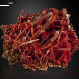 Crocoite<br />Adelaide Mine, Dundas mineral field, Zeehan District, West Coast Council, Tasmania, Australia<br />84 x 61 mm<br /> (Author: Manuel Mesa)