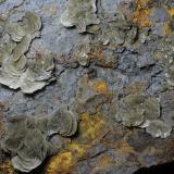 Barita<br />Mines Can Palomeres, Malgrat de Mar, Comarca Maresme, Barcelona, Catalunya, España<br />24 x 15 x 5 cm<br /> (Autor: karbu8)