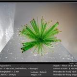 Agardite - Ce<br />Clara Mine, Rankach Valley, Oberwolfach, Wolfach, Black Forest, Baden-Württemberg, Germany<br />fov 1.2 mm<br /> (Author: ploum)