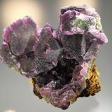 Fluorite<br />Cookes Peak District, Luna County, New Mexico, USA<br />14.8 x 12.7<br /> (Author: Philip Simmons)