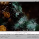 Agardite (Series) with Malachite<br />Kamariza Mines, Agios Konstantinos, Lavrion Mining District, Attikí (Attica) Prefecture, Greece<br />Fov 1.7 mm<br /> (Author: ploum)
