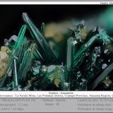 atacamite<br />La Farola Mine, Cerro Pintado, Las Pintadas District, Tierra Amarilla, Copiapó Province, Atacama Region, Chile<br />fov 2.5 mm<br /> (Author: ploum)
