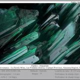 Atacamite<br />La Farola Mine, Cerro Pintado, Las Pintadas District, Tierra Amarilla, Copiapó Province, Atacama Region, Chile<br />fov 1.6 mm<br /> (Author: ploum)
