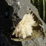 AragonitoCantera Niu Corbu, Noragugume, Provincia Nuoro, Cerdeña, Italiadiámetro: 3 cm (Autor: nerofis2)