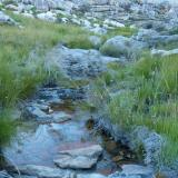 A small mountain stream. (Author: Pierre Joubert)
