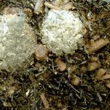 Prehnita, Actinolita y Fluorapatito<br />Cantera Minera I, Cerro de los Serranos, Lebrija, Comarca Bajo Guadalquivir, Sevilla, Andalucía, España<br />14 x 8 x 2 cm.<br /> (Autor: Felipe Abolafia)