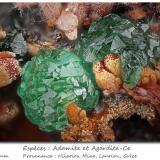 Adamite and Agardite-Ce<br />Hilarion Mine, Hilarion area, Kamariza Mines, Agios Konstantinos, Lavrion Mining District, Attikí (Attica) Prefecture, Greece<br />fov 2.5 mm<br /> (Author: ploum)
