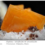 Wulfenite and VanadiniteMibladen (Distrito minero Mibladen), Midelt, Provincia Midelt, Region Meknès-Tafilalet, Marruecosfov 11 mm (Author: ploum)