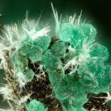Adamite, Mixite<br />Simon Mine, Bell District, Mineral County, Nevada, USA<br />FOV = 1.8 mm<br /> (Author: Doug)