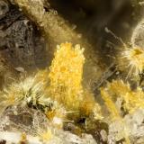 Aegirine<br />Summit Rock, Klamath County, Oregon, USA<br />FOV = 1.3 mm<br /> (Author: Doug)