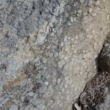 Caliza numulítica in situ, mirador del Salt de Sallent (Autor: Frederic Varela)