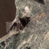 Magnetite<br />Monte Rosso di Verra, Champoluc, Ayas, Aosta Valley<br />83 x 50 mm<br /> (Author: Sante Celiberti)