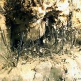 Diópsido<br />Cantera Oficarsa, Cerro de las Culebras, Carchelejo, Cárcheles, Comarca Sierra Mágina, Jaén, Andalucía, España<br />3 x 2 cm<br /> (Autor: Joan Niella)
