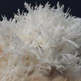 Aragonite (variety flos ferri)<br />Nals-Prissian Mine, Nalles (Nals), Autonomous Province South Tyrol, Trentino-Alto Adige (Trentino-Südtirol), Italy<br />4 x 4 cm<br /> (Author: Volkmar Stingl)