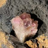 Adamita<br />Mina Ojuela, Mapimí, Municipio Mapimí, Durango, México<br />cristal 10 mm<br /> (Autor: Ramon A  Lopez Garcia)