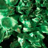 close up of sprays of  velvety malachite. (Author: Gail)