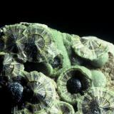 Wavellite Avant Montgomery Co., Arkansas USA.  self-collected. small cabinet specimen (Author: Singingstone48)