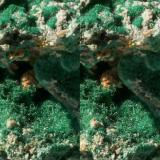 Malachite needles on matrix; Tsumeb Mine, Otawi highlands, Namibia. 65x52x40mm, 184g. GN's collection id 09NAMm001. Taken in direct sunlight. Close-up stereo pair. (Author: Gerhard Niklasch)