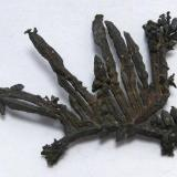 Dendritic silver crystal cluster, from Batopilas, Chihuahua, Mexico. It weighs 1,7 grams and measures 30mm by 27mm by 4mm. (Author: Paul S)