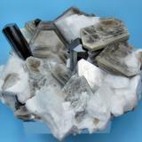 Schorl, muscovite, feldspar Dassu Valley, Shigar Valley, Skardu, Gilgit-Baltistan, Pakistan 116 mm x 83 mm. Both schorl major crystals: 13 mm wide (Author: Carles Millan)