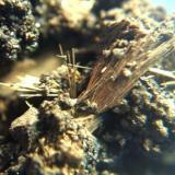 millerita belmut tarragona agujas de 5mm.jpg (Autor: Nieves)