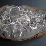 Positivo de Gamba Paraclythia sp en septaria con algo de pirita. Aptiense Ajo Cantabria 13 cm (Autor: PabloR)