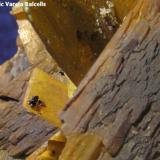 Barita. Mina Nieves (cantera Nieves), Viérnoles, Torrelavega (Cantabria). Tamaño del cristal tabular de barita 1 x 0,8 cm. Detalle de la pieza anterior donde se aprecian los minerales accesorios (calcopirita alterada y cuarzo). (Autor: Frederic Varela)