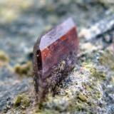 Axinita. Cantera La Juanona. Antequera. Malaga. Tamaño del cristal 10 mm. (Autor: Jose Luis Otero)