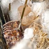 Astrophyllite and sphalerite from Poudrette quarry (Demix quarry; Uni-Mix quarry; Desourdy quarry), Mont Saint-Hilaire, Rouville RCM, Montérégie, Québec, Canada FOV=3mm (Author: Doug)