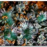 Zalesiita. Encuadre 7 mm. Calicata Dolores, Pastrana, Mazarrón, Murcia. (Autor: Rafa Muñoz(mineralvarado))