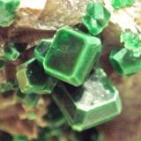 Torbernita, Vimianzo. Cristales de 4 mm (Autor: usoz)