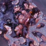 Detalle de las inclusiones de hematites en una de sus caras. (Autor: usoz)