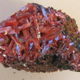 Crocoite, Adelaide Mine, Zeehan Mining District, Dundas, Tasmania, Australia. 10 x 7 x 7 cm. (Author: Lumaes)