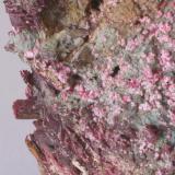 Eritrina (otro detalle de la pieza anterior) - Bou Azzer, Tazenakht, Quarzate, Souss-Massa-Draâ, Marruecos Medidas: 7 x 6,5 x 1,5 cms (Autor: Joan Martinez Bruguera)