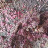 Eritrina (detalle de la pieza anterior) - Bou Azzer, Tazenakht, Quarzate, Souss-Massa-Draâ, Marruecos Medidas: 7 x 6,5 x 1,5 cms (Autor: Joan Martinez Bruguera)