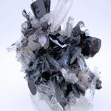 Hübnerite, quartz Mundo Nuevo mine, Huamachuco, Sánchez Carrión, La Libertad, Peru 107 mm x 75 mm. Maximum crystal sizes > Hübnerite: 26 mm long, 13.5 mm wide, 5 mm thick; Quartz: 39 mm long, 8 mm wide (Author: Carles Millan)
