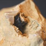 Goethita pseudomórfica de pirita (detalle) Serra de la Mussara - Muntanyes de Prades - Baix Camp - Tarragona - Catalunya - España Medidas: 80 x 60 x 55 mm (Autor: Joan Martinez Bruguera)