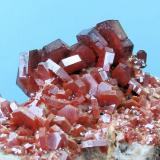 Vanadinite Mibladene, Upper Moulouya lead district, Midelt, Khénifra Province, Meknès-Tafilalet Region, Morocco 111 mm x 92 mm. Major crystal: 11 mm wide, 3 mm thick  Close-up view (Author: Carles Millan)