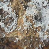 Carbonatofluorapatito (detalle) Mina Elvira - Bruguers - Gavà - Baix Llobregat - Barcelona - Catalunya - España Medidas: 11,5 x 55 x 35 mm (Autor: Joan Martinez Bruguera)