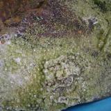 Piromorfita, Mina Las Minillas, Garlitos, Badajoz.  13 X 10 X 9 centimetros ,cristales mayores 3 y 4 milimetros. (Autor: P. apita)