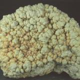 Pirita recubriendo Amonites Playas de Lyme Regis - Dorset - United Kingdom 76 x 60 x 20 mm La otra cara de la pieza (Autor: Joan Martinez Bruguera)