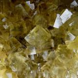 Fluorita  San Marçal, Montseny, Girona, Cataluña, España  Detalle pieza anterior. Cristal mayor 19 mm. (Autor: Jesus Franquesa Baucells)